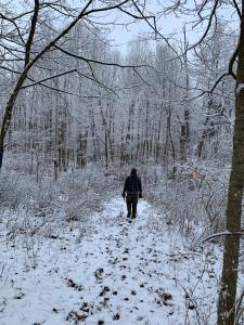 snow, walk, woods